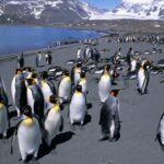 Animales Maravillosos - Pingüinos montañas